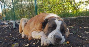 Smutný príbeh psíka, ktorý sa bál zábavnej pyrotechniky. Pozor, blíži sa Silvester