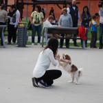 , V martinskom nákupnom centre Tulip sa konala prvá výstava psov pod názvom Martinský oriešok