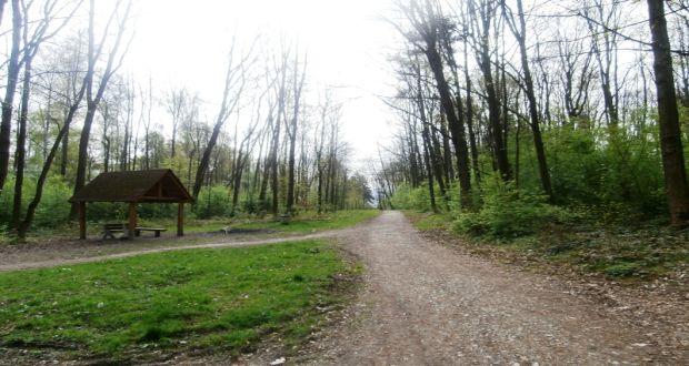 , Mesto Žilina informuje občanov o odstránení napadnutých drevín