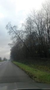, Výrub stromov preruší sobotnú premávku