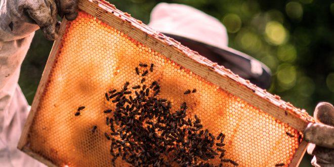 , Vo Vlkolínci ožijú bábky, zabzučia včely a zahryznete si aj do sladkého. Príďte na RemesloFest