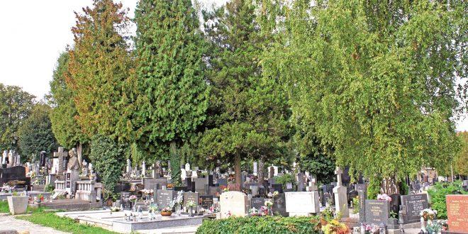 , Žilinské cintoríny sú na Dušičky pripravené