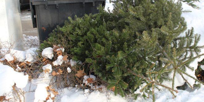 , ZA: Neviete čo s vianočným stromčekom? Využite možnosť odvozu