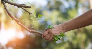 Prečo je tak užitočné a prospešné tráviť čas v prírode?