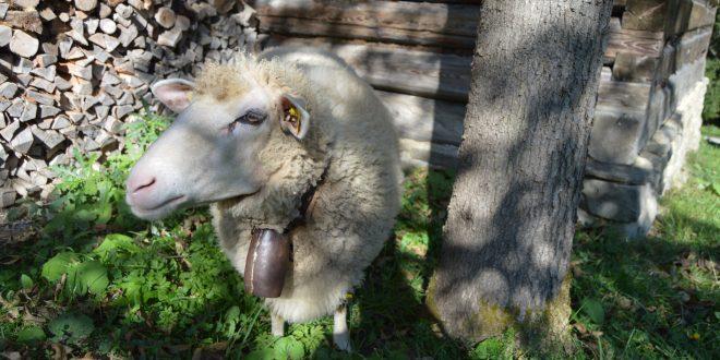 , Otvorenie pastierskej sezóny v Múzeu kysuckej dediny