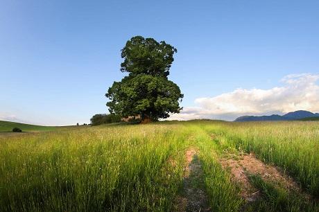 , V ankete Strom roka zabojuje aj lipa zo Žilinského kraja